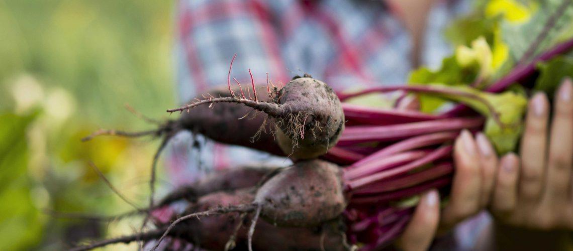agriculture_biologique_credit_Freepik