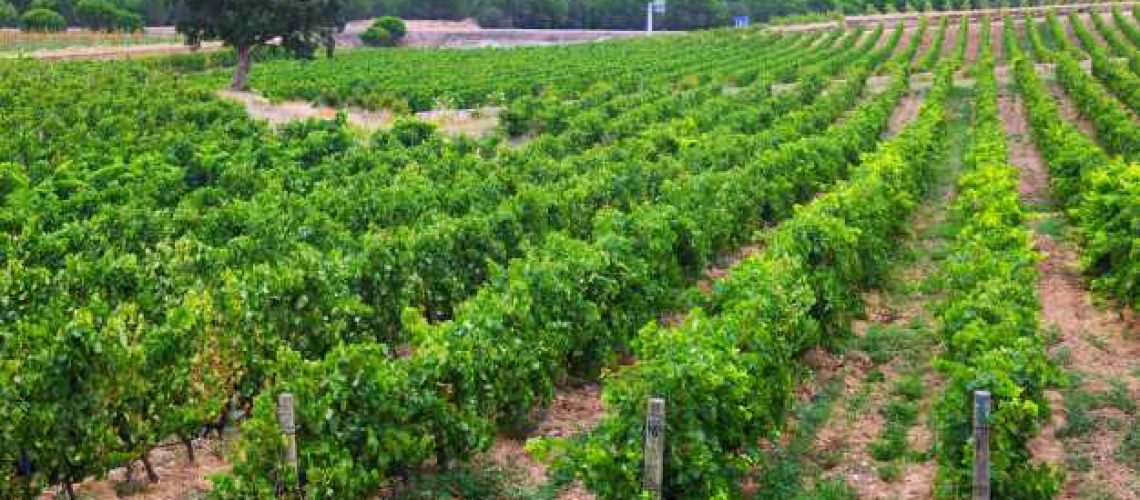 paysage-rural-champ-vignes_1398-5014