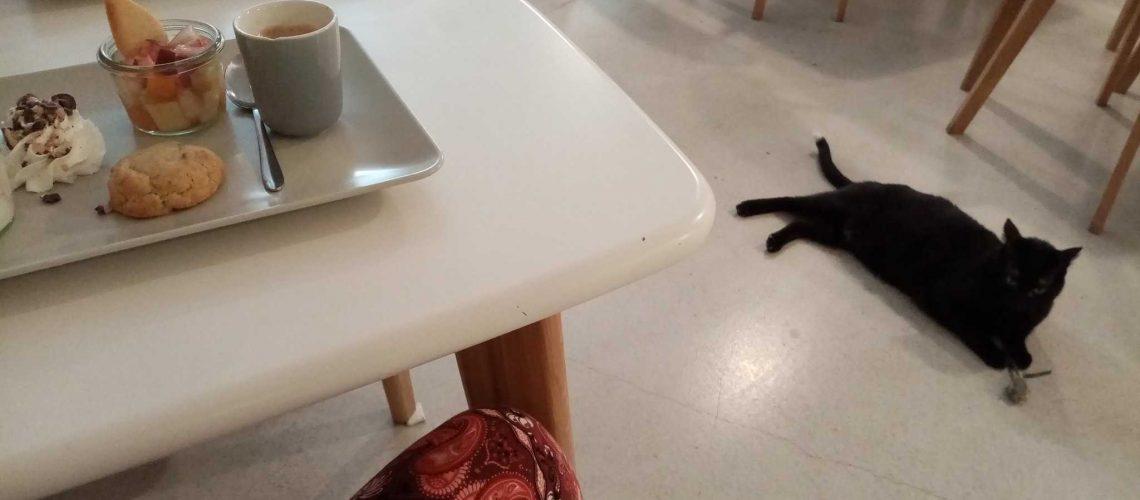 bar à chats tours